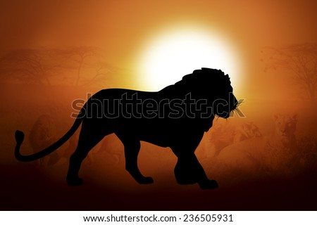 Silhouettes lion against the sunset in Africa - stock photo
