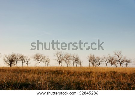 silhouettes naked trees - stock photo
