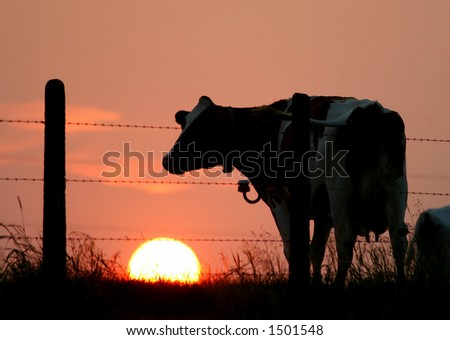 Silhouettes of a cow and a fence against a sunset sky