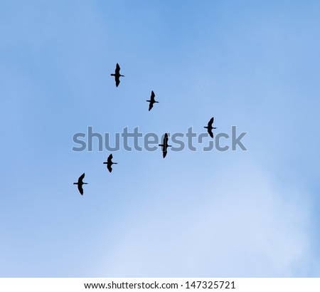 Silhouettes of a flock of birds