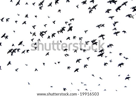 silhouettes of a flock of pigeons