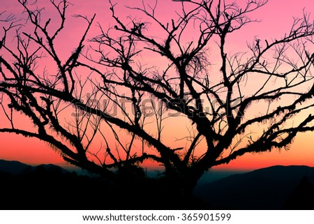 Silhouettes of a tree, colorful evening sky.