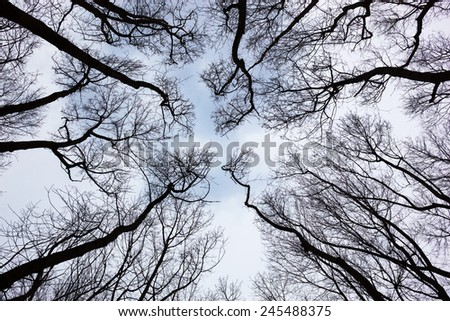 Silhouettes of bare trees against cloudy sky - stock photo