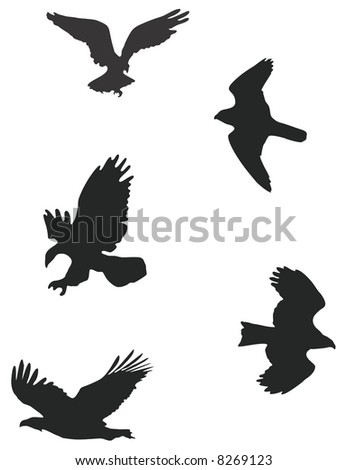 Silhouettes of birds of prey