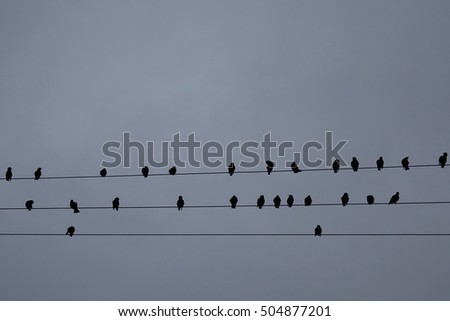 silhouettes of birds on  wires, cloudy sky