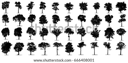 Silhouettes of black tree on white background , The big collection of black tree.