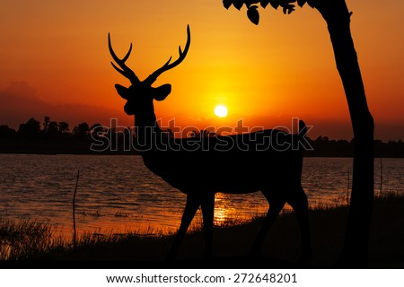 Silhouettes of deer  in lake water against orange sunset Yellow gold sky skyline background  Wild life landscape - stock photo