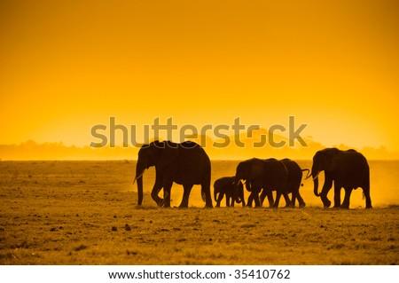 silhouettes of elephants, amboseli national park, kenya - stock photo