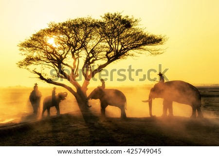 Silhouettes of elephants through the trees at elephant village, surin province, Thailand