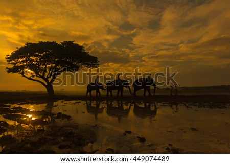 Silhouettes of elephants under the tree at sunrise.