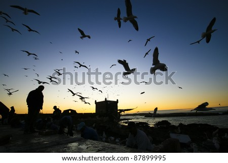 Silhouettes of  fishermans and seagulls in Essaouira, Morocco - stock photo