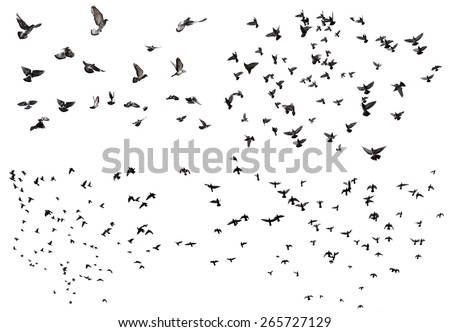 Silhouettes of flying birds isolated on white