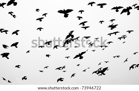 Silhouettes of flying pigeons against grey sky - stock photo