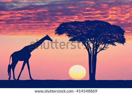 Silhouettes of giraffe and acacia tree against the beautiful sunset sky in the Serengeti Park. Tanzania. Africa. Toned colors vintage photo - stock photo