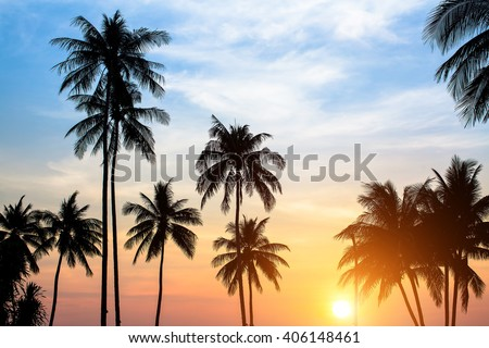 Silhouettes of palm trees against the sky during a tropical sunset. - stock photo