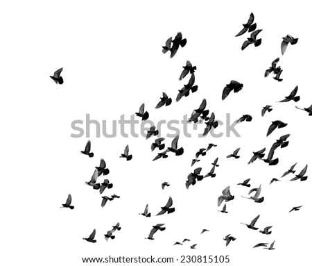 Silhouettes of pigeons. Many birds flying in the sky. Motion blur - stock photo