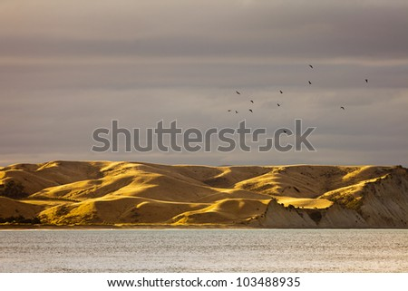 Silhouettes of sea birds above coastal grassland hills turned dry and yellow by drought, South Island, New Zealand - stock photo