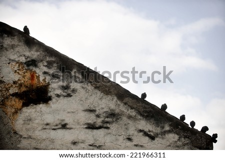 Silhouettes of several pigeons standing on the edge of a sloping roof - stock photo