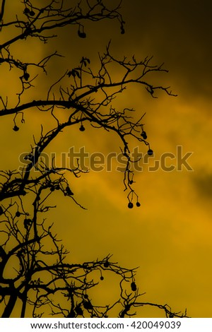 Silhouettes of the branch of tropical plant