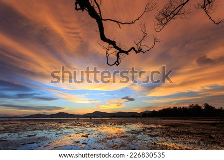 Silhouettes of tree branch at sunset beach in Phuket, Thailand