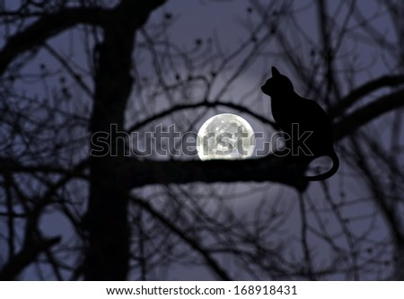 Silhouettes of trees, and a cat with the full moon glowing in the distance. - stock photo