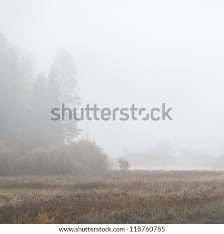 silhouettes of trees in fog during Fall