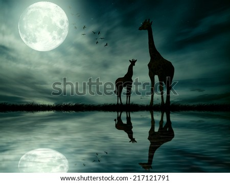 Silhouettes of two giraffes with reflection in lake water against African moonlight skyline - stock photo