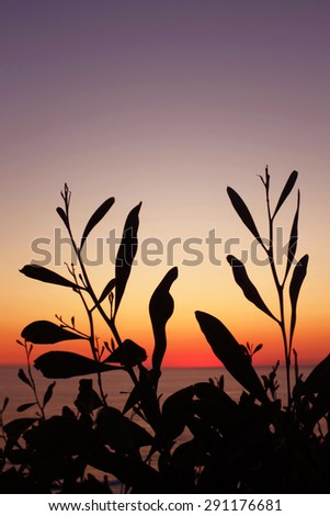 Silhouettes of wild vegetation at the sunset light - stock photo
