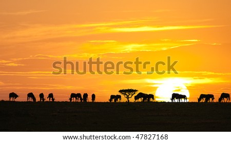 Silhouettes of wildebeests and acacia tree on sunrise in Serengeti national park, Tanzania - stock photo