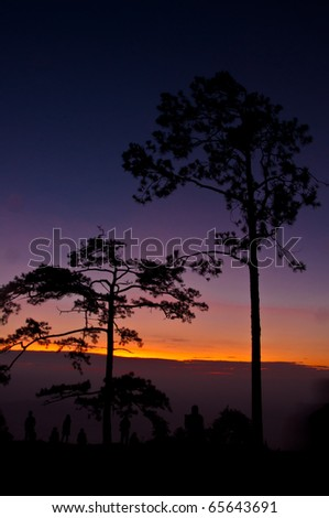 Silhouettes pine forests and tourists background sunrise. - stock photo