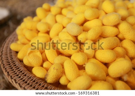 Silk Production Process, Silkworm from egg to worm