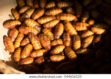 silkworms. animal produce raw material for cloth in Thailand