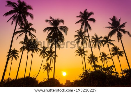 Sillouette of coconut tree during sunrise - stock photo