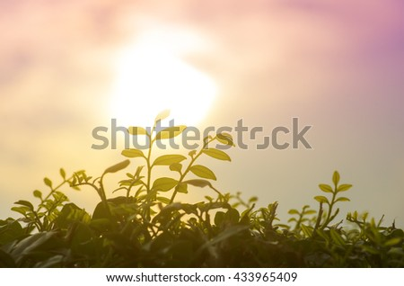 Sillouette of leaf during sunrise - stock photo