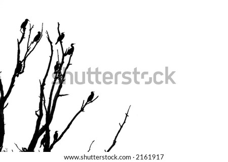 silouette of the birds on the tree - stock photo