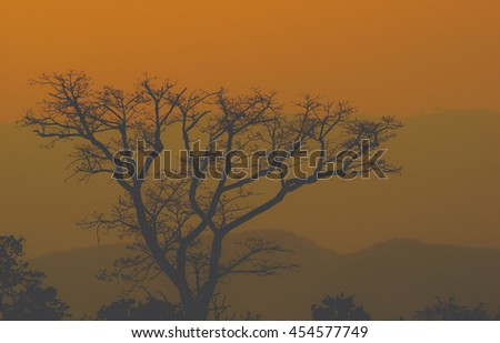 Siluate tone landscape Sunset-Sunrise tree with an african tree at sunset, Zambia, Africa   - stock photo
