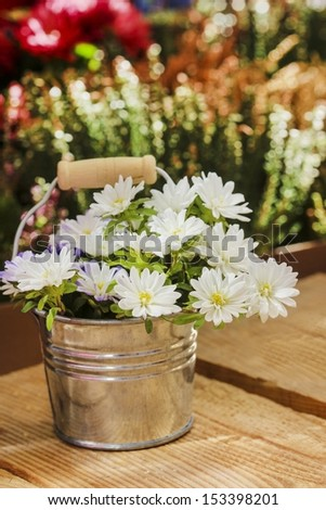 Silver bucket of white daisies