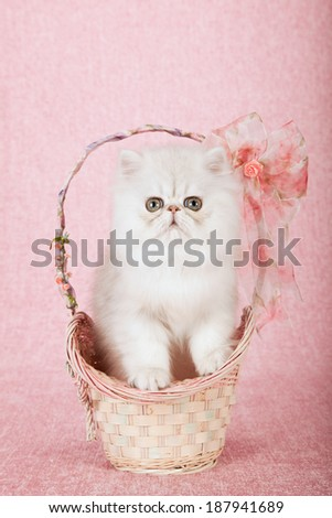 Silver Chinchilla kitten sitting in basket with peach floral print ribbon bows on pink background