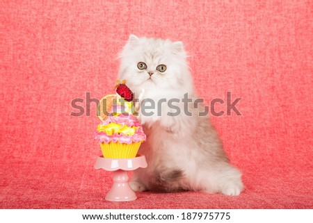 Silver Chinchilla kitten with faux cupcake parfait on pink cupcake stand on bright pink background  - stock photo