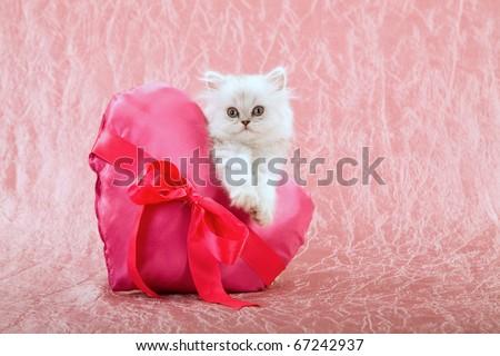 Silver Chinchilla Persian kitten with pink Valentine heart cushion - stock photo