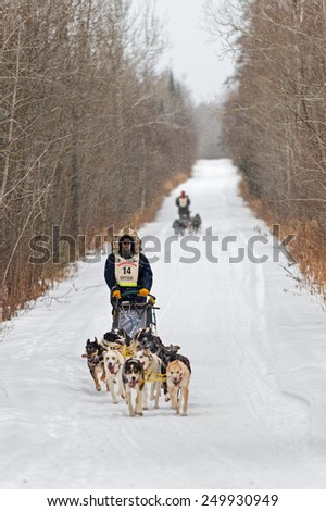 SILVER CREEK MN - JANUARY 25: Ryan Anderson's team leads a team down the trail during the Marathon portion of the John Beargrease Sled Dog Race. Anderson finished first on January 27 2015 in Duluth MN - stock photo