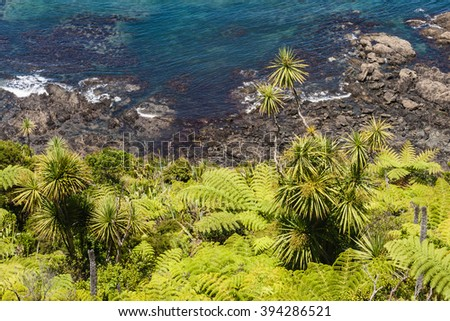 silver ferns and cabbage trees  growing on New Zealand coastline  - stock photo