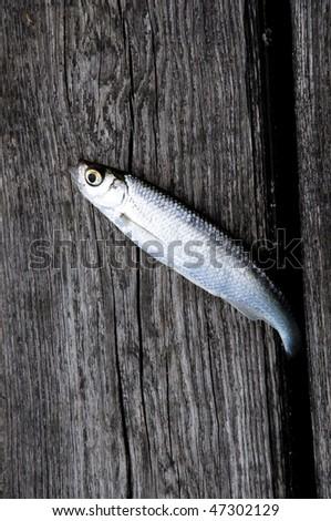 Silver fish - stock photo