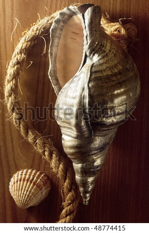 Silver Seashell with Rope - stock photo