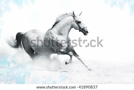 silver-white stallion in snow - stock photo