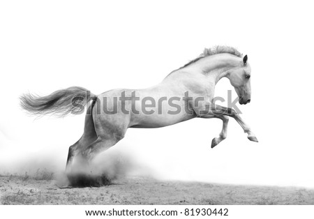 silver-white stallion on black - stock photo