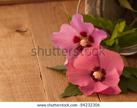 Simple and Lovely Country Setting with Two Rose of Sharon Flowers Freshly Cut from Garden with Room for Your Wording as an Invitation or Card - stock photo
