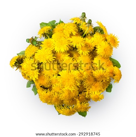 Simple beautiful lush cute corsage of vivid ocher fluffy blowballs with green leaves isolated on white backdrop with clipping path. View close-up with space for text - stock photo