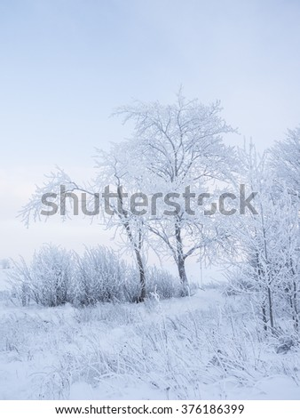 Simple beautiful winter landscape. It is a lot of snow and trees - stock photo