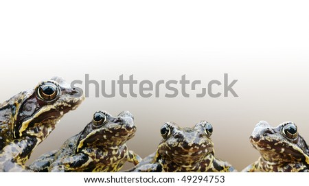 Simple collage postcard background  with frogs. - stock photo